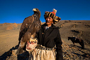 Kazakh eagle hunter (Berkutchi) r with his golden eagle perched on his arm, Altai, Mongolia. Model released.  -  Klein & Hubert