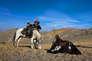 Kazakh eagle hunter (Berkutchi) with his horse and his Golden eagle (Aquila chrysaetos) Altai, Mongolia. Model released.  -  Klein & Hubert