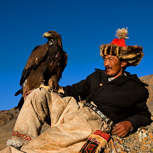 Kazakh eagle hunter (Berkutchi) resting with his golden eagle, Altai, Mongolia. Model released.  -  Klein & Hubert