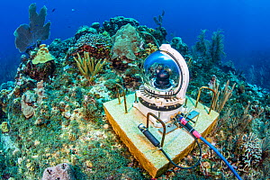 An underwater webcam monitoring a coral reef. Jack McKenney's Canyons. East End, Grand Cayman, Cayman Islands, British West Indies. Caribbean Sea.  -  Alex Mustard