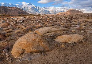 Deeply weathered granite boulders and the snow covered Sierra Nevada Mountains (Lone Pine Peak left of center, Mt Whitney spires in center) in the Alabama Hills, California, USA, November.  -  John Shaw