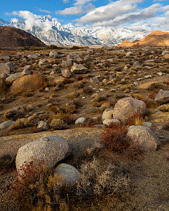 Deeply weathered granite boulders and the snow covered Sierra Nevada Mountains (Lone Pine Peak left of center) in the Alabama Hills, California, USA, November.  -  John Shaw