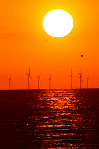 Wind turbines i=out at sea at sunset. County Wicklow, Ireland, June. - David  Woodfall