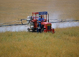 An old Massey Ferguson tractor adapted to spray in high crops spraying a dessicant onto an oilseed rape crop neaing harvest, Oxfordshire  -  Nigel Cattlin