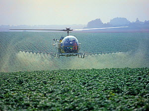 Bell helicopter spraying a potato crop with trace element fertilizer and a fungcide against late blight, Hampshire  -  Nigel Cattlin
