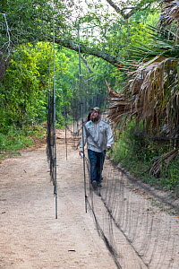 Wildlife biologist from Texas Parks and Wildlife Department carrying bird caught in mist net prior to ringing. Southmost Preserve, The Nature Conservancy reserve, Brownsville, Texas, USA. July 2019.  -  Wendy Shattil