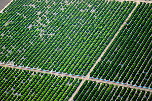 Citrus orchard, aerial view. McAllen, Hidalgo County, Texas, USA.  -  Wendy Shattil