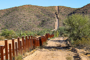 Border posts through Sonoran Desert along Mexico-USA border, prior to construction of 30 foot steel wall. View from Mexico, Organ Pipe National Monument, Arizona, USA on other side. November 2019.  -  Wendy Shattil