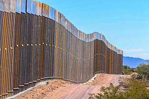 Construction of border wall, view from Sonoyta, Mexico with Organ Pipe National Monument, Arizona, USA on the other side. November 2019.  -  Wendy Shattil