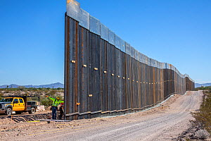 Border wall constuction through the Sonoran Desert. View from Sonoyta, Mexico towards Organ Pipe Cactus National Monument, Arizona, USA. November 2019.  -  Wendy Shattil