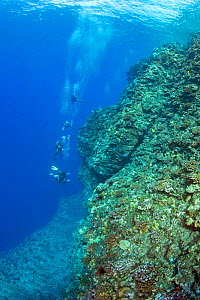 A group of divers on one of the corners of the Backwall at Molokini Marine Preserve, off Maui, Hawaii. Model released. - David Fleetham