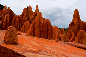 The Red Tsingy of the Irodo. Unlike the other Tsingy, the red formations are not made of rocks but of a mix of soil: sand, clay, and laterite, which creates this fascinating red colour. Madagascar.  -  Lorraine Bennery