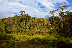 Swampy clearing in the middle of the rainforest, Ranomafana National Park  -  Lorraine Bennery