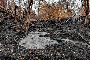 Martins Creek and surrounds after 2019/20 bushfires devastated the area. Rivers in the south-east of Australia endured drought, bushfires and intense rainfall in a brief period. The rains washed ash a...  -  Doug Gimesy