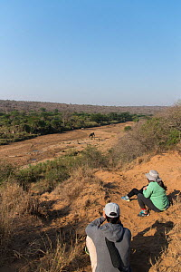 Hikers watching elephants (Loxodonta africana) in dry riverbed, Hluluwe -Imfolosi Park, Kwazulu Natal, South Africa  -  Rhonda Klevansky