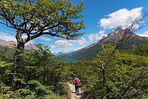 Person walking along path / trail between Chile and Argentina, with Fitzroy mountains in the background. O'Higgens area, Patagonia, Argentina. January 2017. - Rhonda Klevansky