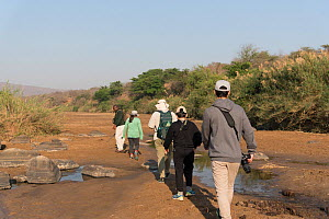 People walking with a game ranger in Hluluwe-Imfolosi Park, Kwazulu Natal, South Africa  -  Rhonda Klevansky