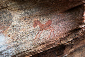 San art of the Sevilla Rock Art Trail, Cedarberg, South Africa.  -  Rhonda Klevansky