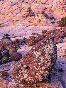 Lichen covered basalt boulders on eroded petrified sand dunes of Navajo Sandstone. Grand Staircase-Escalante National Monument, Utah, USA. October 2019.  -  Jack Dykinga