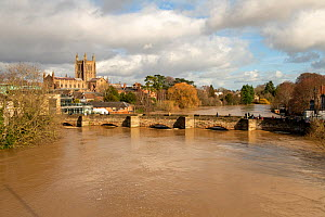 Hereford flooded by the River Wye, with Old Wye bridge and Hereford Cathedral, England, UK. Taken during Storm Dennis, 17 February 2020.  -  Will Watson