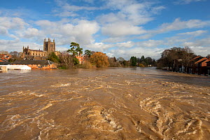 Hereford flooded by the River Wye, with Old Wye bridge and Hereford Cathedral, England, UK, Taken during Storm Dennis, 17 February 2020.  -  Will Watson