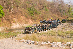 Photographers and tourists waiting in jeeps for Bengal tiger (Panthera tigris tigris). Jim Corbett National Park, Uttarakhand, India.  -  Sylvain Cordier