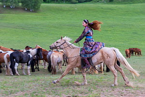 Woman in traditional dress riding on horseback past herd of horses. Bashang Grassland, near Zhangjiakou, Hebei Province, Inner Mongolia, China. 2018.  -  Sylvain Cordier