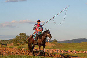 Mongol man in traditional dress on horse, holding stick to herd and catch livestock. In evening light with hills of Bashang Grassland in background. Near Zhangjiakou, Hebei Province, Inner Mongolia, C...  -  Sylvain Cordier
