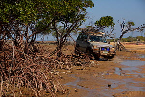 4x4 driving through the mangroves at the mouth of Running Creek. Queensland, Australia.  -  Tim  Laman