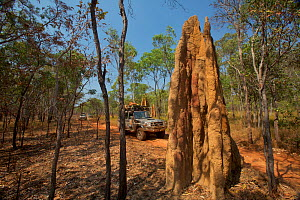 Vehicles passing tall termite mounds along the Overland Telegraph Line track Cape York Peninsula, Queensland, Australia.  -  Tim  Laman