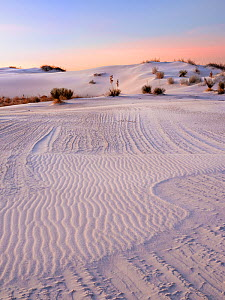 Striated texture in white gypsum sand dunes, created by wind and moisture laden dunes. White Sands National Monument, New Mexico. USA. December.  -  Jack Dykinga