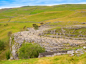 Tourists walking over limestone pavement. Malham Cove, Yorkshire Dales National Park, England, UK. September 2019.  -  Gary  K. Smith