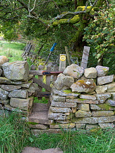 Gate through drystone wall, on public footpath. Wensleydale, Yorkshire Dales National Park, England, UK. September.  -  Gary  K. Smith