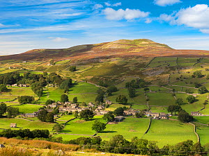 Hillside village surrounded by fields with drystone walls, moorland above. Healaugh, Swaledale, Yorkshire Dales National Park, England, UK. September 2019.  -  Gary  K. Smith