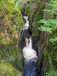 Waterfalls along River Doe in Baxenghyll Gorge, Ingleton, Yorkshire Dales National Park, England, UK. September.  -  Gary  K. Smith
