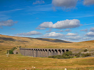Ribblehead Viaduct, Batty Moss, Ribble Valley, Yorkshire Dales National Park, England, UK. September 2019.  -  Gary  K. Smith