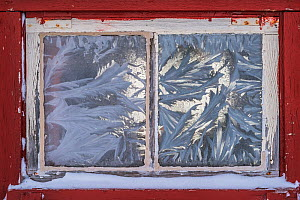 Frost patterns on the window of a mountain cabin. Forollhogna National Park, Norway. January.  -  Orsolya Haarberg