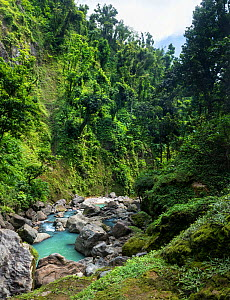 White River just below Victoria Falls, Dominica, Eastern Caribbean. The water is milky whittish-blue as it comes from volcanic springs of Boiling Lake. February 2019. Stitched panorama.  -  Derek Galon