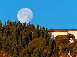 Full moon setting over a wooded ridge in the Lamar Valley, Yellowstone National Park, Wyoming, USA, June 2019 - Mike Read