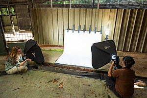 Behind the scenes for Wild Wonders of China at Night Safari, Singapore. A studio background and lights set up near the Sunda pangolin facilities. Photographer Suzi Eszterhas on the left, Night Safari... - Jak Wonderley / Wild Wonders of China