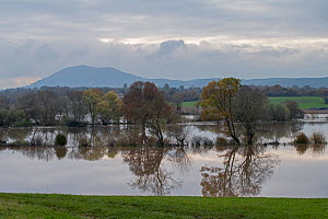 Flooded river, Teme Valley and the Malvern Hills AONB, Worcestershire, England, November 2019  -  Will Watson