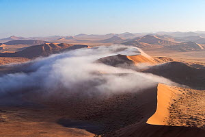 Red Dunes covered in mist, Namib-Naukluft National Park, Namibia, Africa  -  Sylvain Cordier