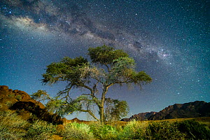 Camel thorn tree (Vachellia erioloba) in the rocky outcrops around Brandberg Mountains (in the background) at night with the Milky Way, and full moon lighting the foreground. Namibia. - Emanuele Biggi