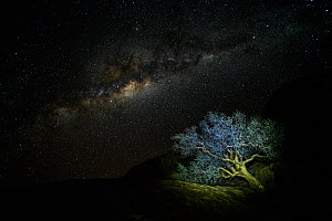 A Commiphora sp. tree among rocks in the Namib desert under a starry Milky Way sky, Namibia - Emanuele Biggi