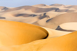 View of sand dunes, Walvis Bay, Namibia, Africa  -  David Allemand
