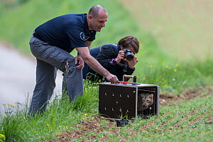Scientists from KORA releasing a wild cat (Felis sylvestris) after a radio tracking collar has been fitted, Switzerland 2019  -  Laurent Geslin