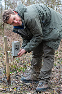 Scientist with remote camera focussed on a trap to catch wild cat (Felis silvestris) . As soon as the cat is caught, the camera sens a picture by SMS to the KORA biologists, Switzerland 2019  -  Laurent Geslin