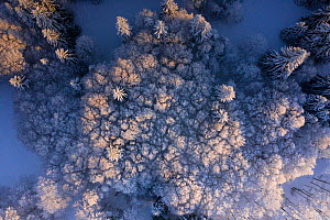 Aerial view of snow covered woodland in winter, Switzerland  -  Laurent Geslin