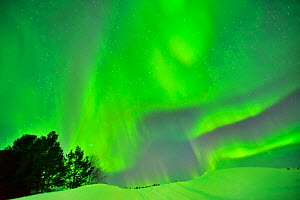 Northern lights in Nil'moguba, Karelia, Russia. White Sea.  -  Pascal Kobeh