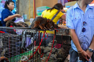 Small mammals (rodents) for sale at Chatuchak Market, Bangkok, Thailand. Tied to cages with string. - Jo-Anne McArthur / We Animals